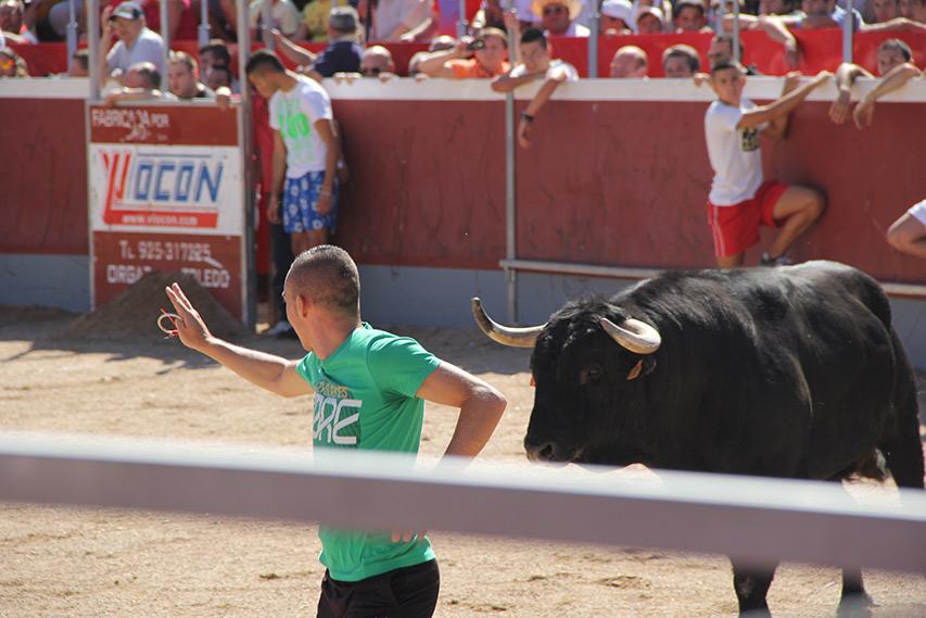 Collado Villalba bulls